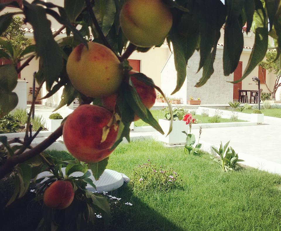 Baia Benessere Eco-Vegan B&B – Tolfa (RM)