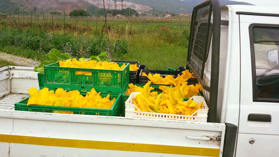 azienda agricola orticello bio
